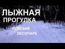 Лыжная прогулка по Невскому лесопарку