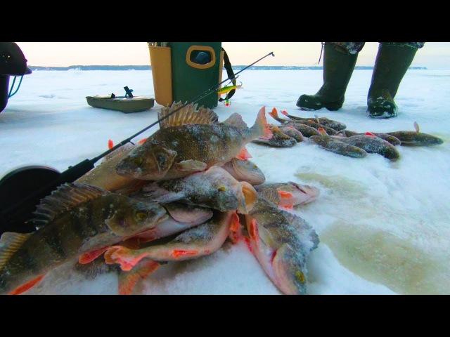 ПОЛНЫЙ ОТРЫВ ПО ОКУНЮ Зимняя рыбалка 2018 Ловля Окуня на Волге