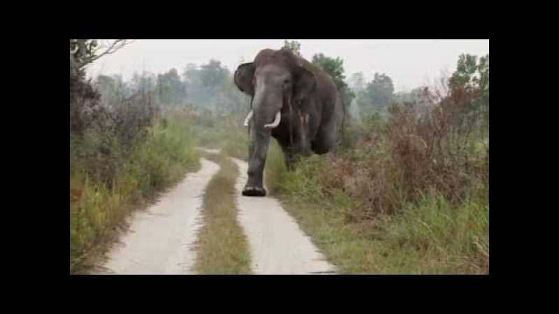 When Wild Elephants Attack