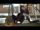 Gorilla Lope's Quirk Compilation