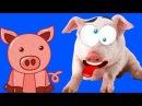 СИМУЛЯТОР СВИНЬИ сумасшедшая свинка бегает и все ломает 🐷 Pig Simulator играет в детский летсплей