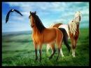 Молодая лошадь. Детская песня и мультфильм!Спирит-душа прерий
