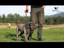 Lishinu Original Bangee поводок-рулетка для крупных пород собак