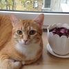 Kote Kot