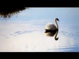 Ф. Шопен - Ноктюрн - Осень. - Frеdеric Chopin - Nocturne op.9