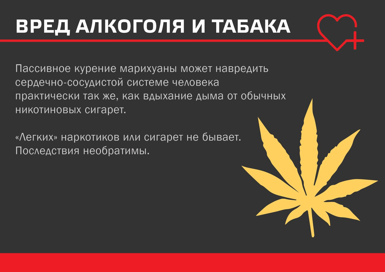 В чем вред курения марихуаны конопля семейство пасленовые