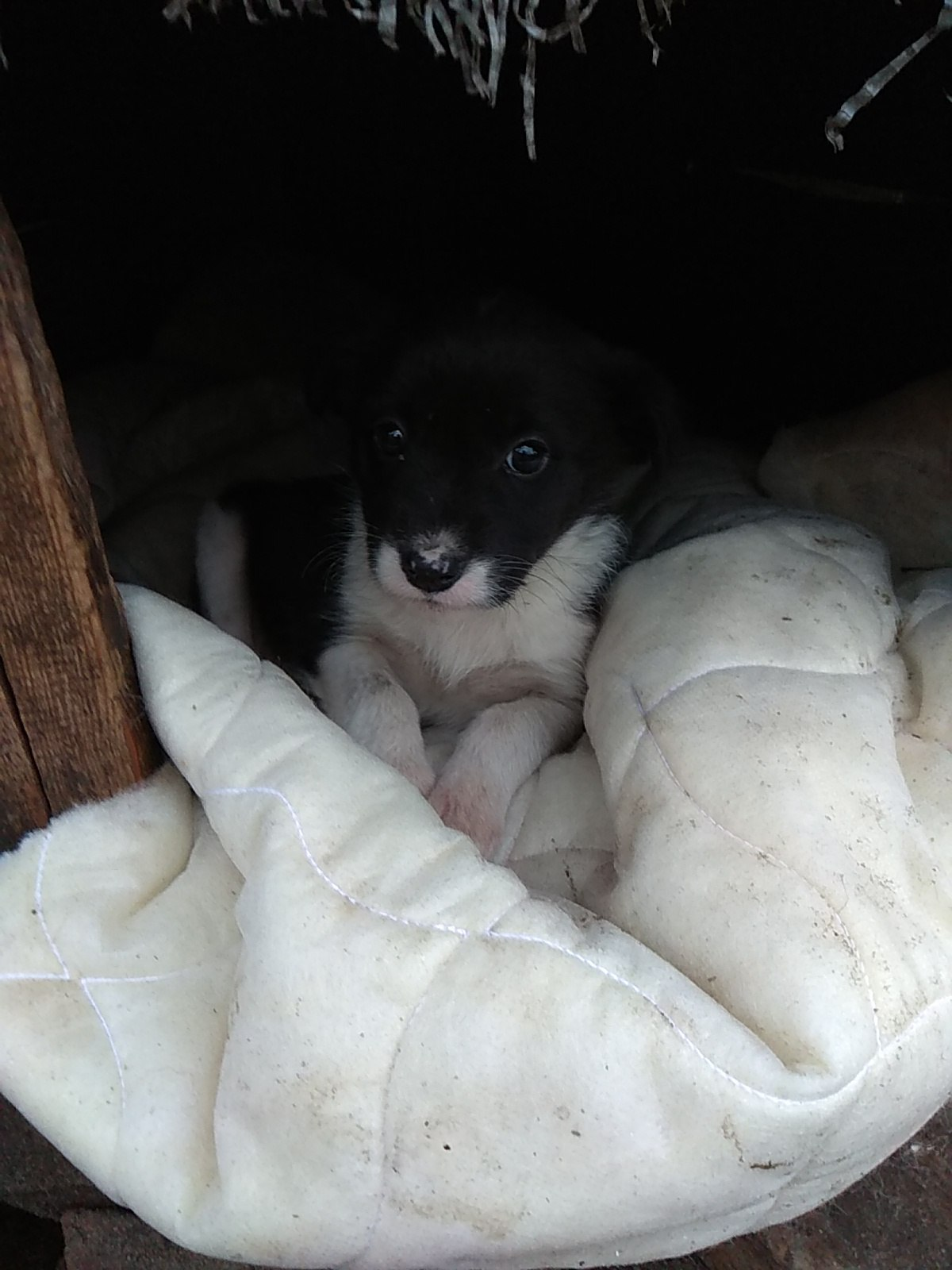 Отдам щенка в хорошие руки,подбросили во двор пару дней назад.
