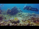 Черепаха косит трынь-траву на дайвсайте Кристал бей острова Нуса-Пенида Дайвинг на Бали