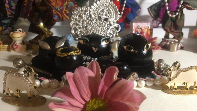 Даршан Шри Шри Кришна и Баларама
