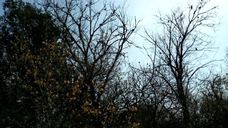 пение птиц в керченской лесополосе