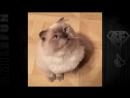 Смешные Танцующие Коты