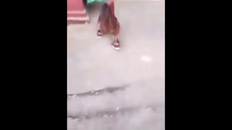 Прикол петух бежит.mp4