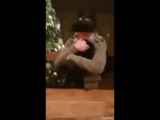 Спасительная жопа собаки