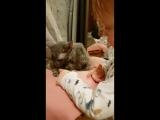 Мой маленький любитель животных