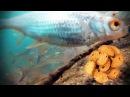 РЕАКЦИЯ РЫБЫ НА СУХАРИ И МОТЫЛЯ Подводная съемка зимняя рыбалка 2018