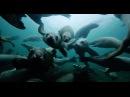 Подводный вальс