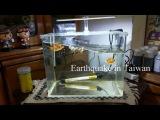 Землетрясение на Тайвани | Earthquake in Taiwan |