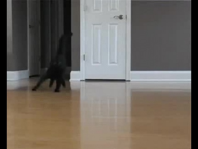 Waltz of the Cats