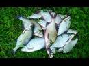 Как сделать супер уловистое тесто для рыбалки