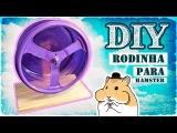 Como fazer uma rodinha para hamster  AnimalPetFans