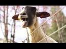 Kiesza's Hideaway - The Screaming Animals Edition