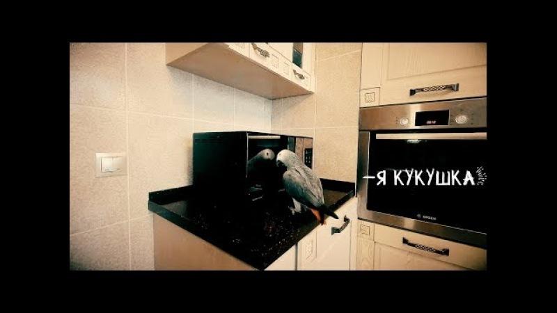 Когда попугай Петруня увидел себя в зеркале, он начал ТАКОЕ ГОВОРИТЬparrot says with reflection