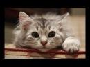 Смешное видео про кошек и котов, невероятные приключения пушистых!