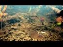 Биотоп верховья реки Рио Негро