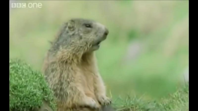 Śmieszne zwierzęta z polskim lektorem