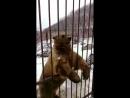 Наши Русские Мишки косолапые