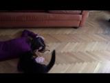Реакция кота на фейковую смерть