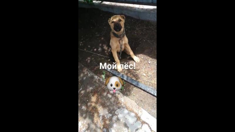Мой пёс Синбад