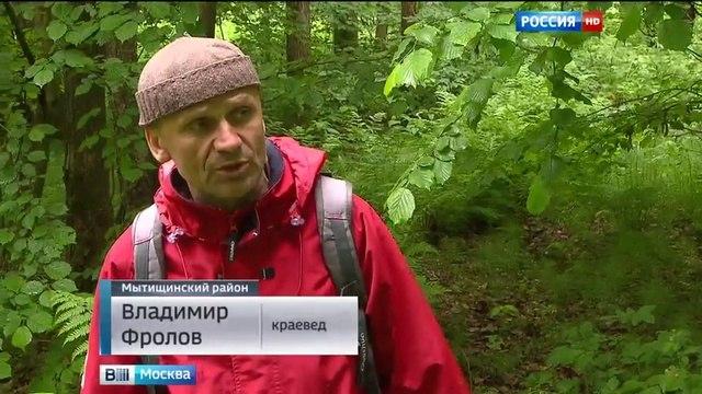 Вести-Москва • В Подмосковье активизировались черные копатели