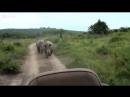 Носорог анаконда 10