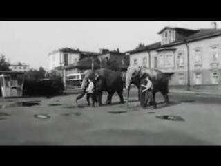 Слоны на набережной в Архангельске, 1968г.