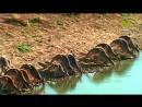 Нетронутые уголки дикой природы / Natures Microworlds 12 Australias Red Centre