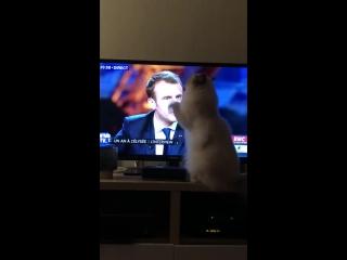 Même les chats n'en peuvent plus de ses mensonges et de sa tête de premier de la classe...