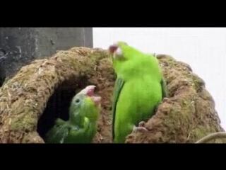 Когда с другом услышали любимую песню