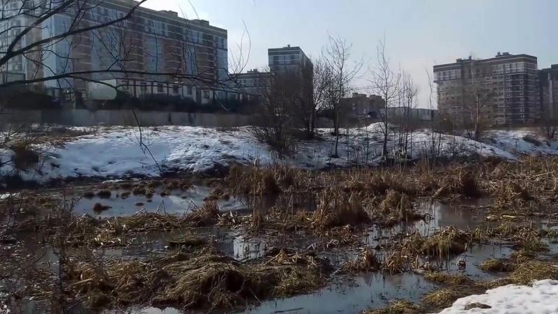 Труба слива нечистот в пруд рядом с ЖК Татьянин Парк (у БЦ Боровский) _ 2017-03-