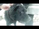 22 01 18 Черная собака потеряшка 008