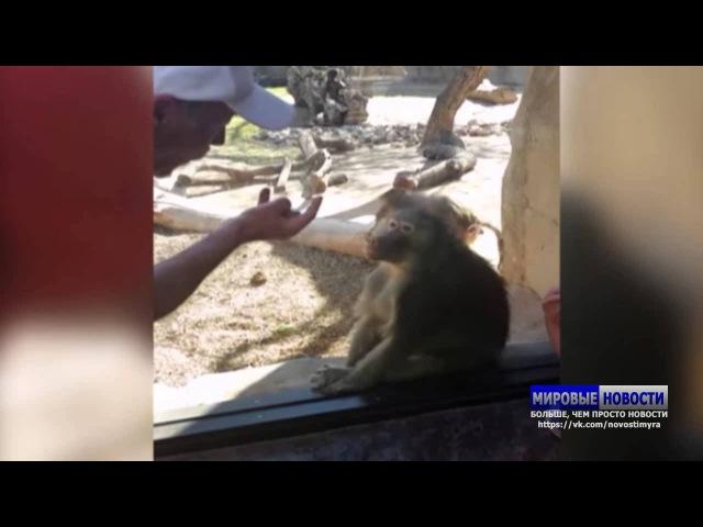 Бабуин не на шутку удивился фокусу посетителя зоопарка