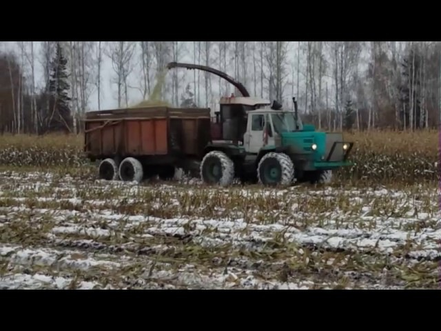 Уборка кукурузы 2015.Трактора К 744 2штуки Т 150 машины Урал и два комбаина