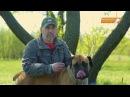 Собаки Гладиаторы бурбуль