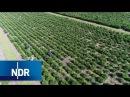 Tannenbaum: 250.000 Weihnachtsbäume | Wie geht das? | NDR