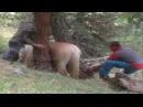 ВИДЕО ДО СЛЁЗ Спасение лошади СПАСЕНИЕ ЖИВОТНЫХ Очень трогательное видео СПАСЕНИЕЖИВОТНЫХ