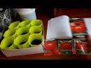Сажаю томаты для раннего урожая Как и в чем замачиваю семена