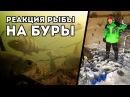 Реакция рыбы на ДИАМЕТР ледобура