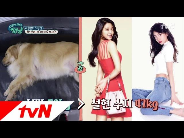 171213 tvN's Dear My Human EP13 Lee Jungshin Simba cuts 3