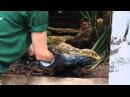 Venom Defender Gloves as used at London Zoo