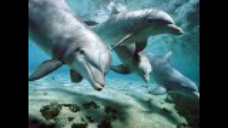 Успокаивающие звуки дельфинов- для малышей.